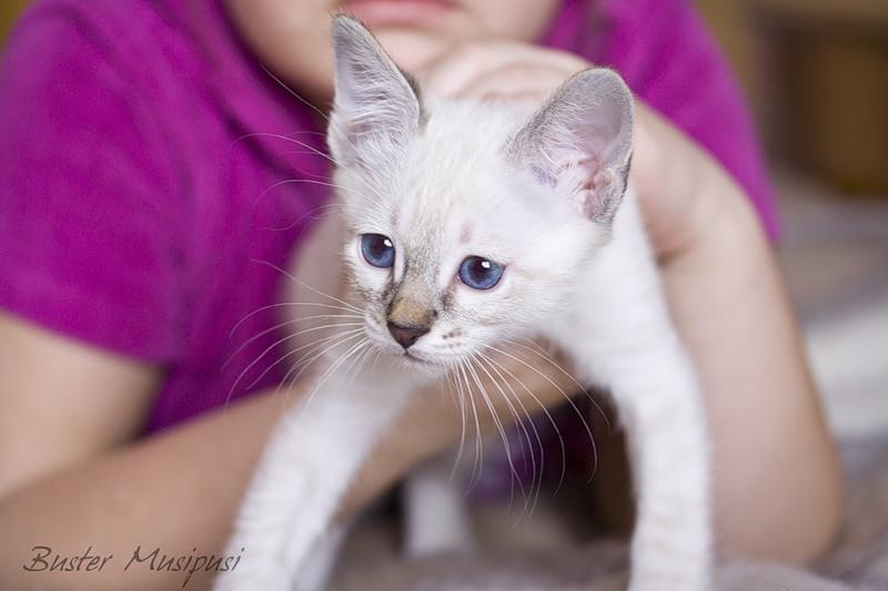 познакомить котенка с новым домом